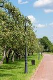 Δέντρα της Apple στο πάρκο Kolomenskoye Στοκ Φωτογραφία
