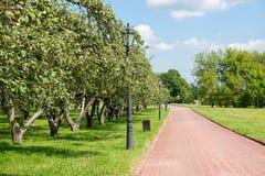 Δέντρα της Apple στο πάρκο Kolomenskoye Στοκ φωτογραφία με δικαίωμα ελεύθερης χρήσης