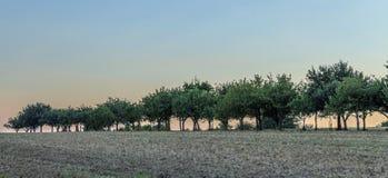 Δέντρα της Apple στο όμορφο τοπίο στο φως πρωινού Στοκ φωτογραφία με δικαίωμα ελεύθερης χρήσης