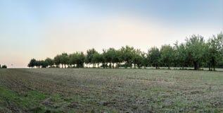 Δέντρα της Apple στο όμορφο τοπίο στο φως πρωινού Στοκ Εικόνες