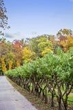 Δέντρα της Apple το φθινόπωρο Στοκ Εικόνα