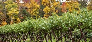 Δέντρα της Apple το φθινόπωρο Στοκ εικόνες με δικαίωμα ελεύθερης χρήσης