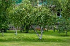 Δέντρα της Apple το φθινόπωρο Στοκ Εικόνες