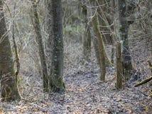 Δέντρα της Apple το χειμώνα στο φως βραδιού Στοκ φωτογραφίες με δικαίωμα ελεύθερης χρήσης