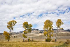 Δέντρα της Aspen στα χρώματα φθινοπώρου στοκ φωτογραφία με δικαίωμα ελεύθερης χρήσης