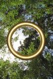 Δέντρα της Karri, δυτική Αυστραλία Στοκ φωτογραφία με δικαίωμα ελεύθερης χρήσης