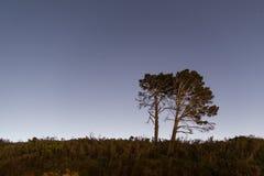 Δέντρα τη νύχτα Στοκ εικόνες με δικαίωμα ελεύθερης χρήσης