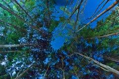 Δέντρα τη νύχτα Στοκ Φωτογραφία