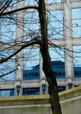 Δέντρα, τοίχοι γυαλιού και αντανακλάσεις στην οδό της δυτικής Γεωργίας Στοκ Φωτογραφίες