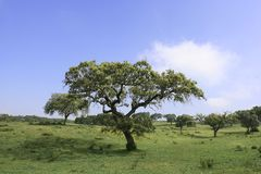 δέντρα τοπίων πεδίων στοκ φωτογραφία
