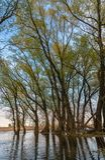 δέντρα τοπίων χεριών σχεδίων Στοκ εικόνες με δικαίωμα ελεύθερης χρήσης
