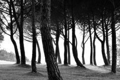 Δέντρα Τοσκάνη Στοκ Φωτογραφία