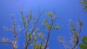 Δέντρα του καλοκαιριού στοκ εικόνες