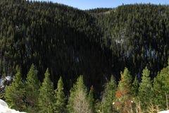 Δέντρα του Κολοράντο Στοκ φωτογραφία με δικαίωμα ελεύθερης χρήσης