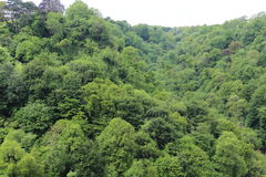 Δέντρα του Μπρίστολ Στοκ εικόνες με δικαίωμα ελεύθερης χρήσης
