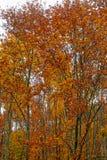 Δέντρα του φθινοπώρου Στοκ Φωτογραφίες