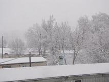 Δέντρα του χειμώνα Στοκ Εικόνα