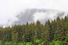 Δέντρα του FIR από τα βουνά της Misty Στοκ φωτογραφία με δικαίωμα ελεύθερης χρήσης