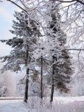Δέντρα του FIR και πεύκων στο χιόνι του σκοτεινού χειμερινού δάσους στον παγωμένο δασικό δρόμο υδρονέφωσης Στοκ φωτογραφίες με δικαίωμα ελεύθερης χρήσης