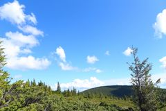 Δέντρα του FIR στα βουνά με τα σύννεφα στο υπόβαθρο Στοκ εικόνες με δικαίωμα ελεύθερης χρήσης