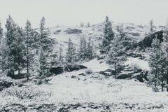 Δέντρα του FIR στην κοιλάδα βουνών κάτω από το χιόνι Στοκ Φωτογραφία