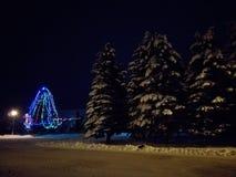 Δέντρα του FIR στη νύχτα στοκ εικόνα με δικαίωμα ελεύθερης χρήσης