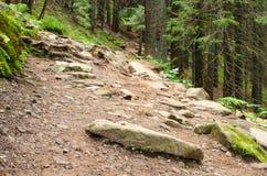 Δέντρα του Forrest με την πορεία στις μέσες και ακτίνες ήλιων Στοκ Φωτογραφία
