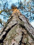 Δέντρα το καλοκαίρι στοκ φωτογραφία με δικαίωμα ελεύθερης χρήσης