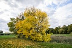 Δέντρα το φθινόπωρο Στοκ Εικόνες