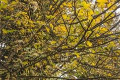 Δέντρα το φθινόπωρο Στοκ φωτογραφία με δικαίωμα ελεύθερης χρήσης