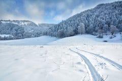 Δέντρα το χειμώνα Ρουμανία Στοκ Φωτογραφία
