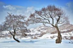 Δέντρα το χειμώνα Ρουμανία Στοκ εικόνα με δικαίωμα ελεύθερης χρήσης