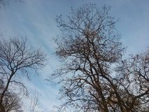 Δέντρα το χειμώνα όταν το σύνολο ήλιων Στοκ Εικόνα