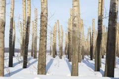 Δέντρα το χειμώνα στοκ φωτογραφία με δικαίωμα ελεύθερης χρήσης