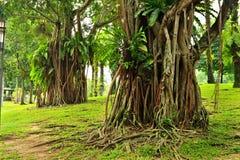 δέντρα τροπικά στοκ εικόνες