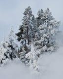 δέντρα φαντασμάτων Στοκ φωτογραφία με δικαίωμα ελεύθερης χρήσης