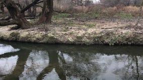 Δέντρα φθινοπώρου από τον ποταμό Παγετοί φθινοπώρου Θλιβερός κρύος καιρός απόθεμα βίντεο
