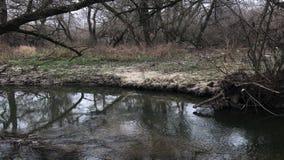 Δέντρα φθινοπώρου από τον ποταμό Παγετοί φθινοπώρου Θλιβερός κρύος καιρός φιλμ μικρού μήκους