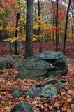 Δέντρα φθινοπώρου και μεγάλοι λίθοι Στοκ εικόνες με δικαίωμα ελεύθερης χρήσης