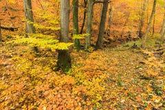 Δέντρα φθινοπώρου και χρωματισμένα φύλλα Στοκ Εικόνες