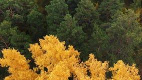 Δέντρα φθινοπώρου κατά την πράσινη, κίτρινη, πορτοκαλιά και κόκκινη δασική άποψη άνωθεν Χρώματα φθινοπώρου Πέταγμα πέρα από ζωηρό φιλμ μικρού μήκους