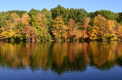 Δέντρα φθινοπώρου κοντά στη λίμνη με τις πάπιες πρασινολαιμών, καναδόχηνες στην αντανάκλαση νερού Στοκ εικόνα με δικαίωμα ελεύθερης χρήσης