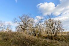Δέντρα φθινοπώρου κοντά στον ποταμό Dnieper Στοκ Εικόνα