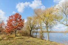 Δέντρα φθινοπώρου κοντά στον ποταμό Dnieper Στοκ εικόνες με δικαίωμα ελεύθερης χρήσης