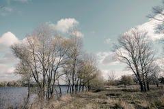 Δέντρα φθινοπώρου κοντά στον ποταμό Dnieper Στοκ Εικόνες