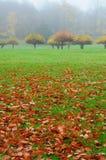 δέντρα φθινοπώρου μήλων Στοκ Εικόνες