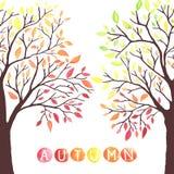 Δέντρα φθινοπώρου με την πτώση κάτω από τα φύλλα διανυσματική απεικόνιση