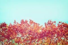 Δέντρα φθινοπώρου με το κόκκινο φύλλωμα στο υπόβαθρο ουρανού Στοκ Εικόνα