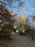 Δέντρα φθινοπώρου μια ηλιόλουστη ημέρα στοκ εικόνες με δικαίωμα ελεύθερης χρήσης