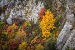 Δέντρα φθινοπώρου πέρα από τους δύσκολους απότομους βράχους Στοκ φωτογραφίες με δικαίωμα ελεύθερης χρήσης